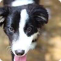 Adopt A Pet :: Swift - Austin, TX
