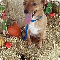 Adopt A Pet :: Linny Adoption pending - Franklinton, NC