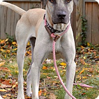 Adopt A Pet :: Gus - Norwalk, CT