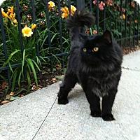 Adopt A Pet :: Tim - Waldorf, MD