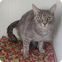 Adopt A Pet :: Lucy - Newport, NC