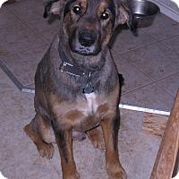 Adopt A Pet :: Atticus - Bellingham, WA