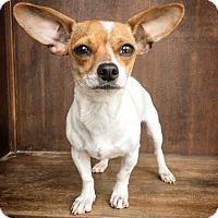 Adopt A Pet :: Vera - Fredericksburg, TX