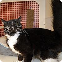 Adopt A Pet :: Bear - Richmond, VA