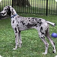Adopt A Pet :: Penny - Pearl River, NY