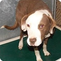 Adopt A Pet :: Tommy - Shirley, NY