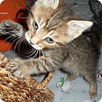 Adopt A Pet :: Cooper - Chandler, AZ