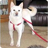 Adopt A Pet :: Mona (Iowa) - Round Lake, IL