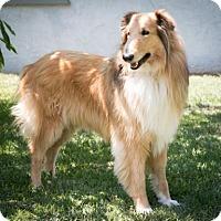 Adopt A Pet :: Cindy - Riverside, CA