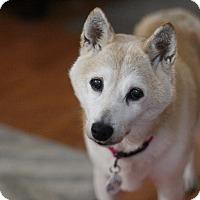 Adopt A Pet :: Mei - Manassas, VA