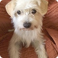 Adopt A Pet :: Yuki - San Francisco, CA
