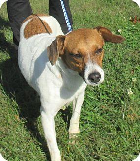 Hound (Unknown Type) Mix Dog for adoption in Reeds Spring, Missouri - Princess