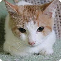 Adopt A Pet :: Season - Richand, NY