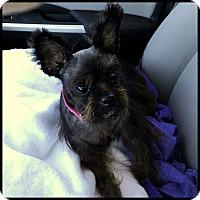 Adopt A Pet :: MISS GRETA in Deatsville, AL. - Seymour, MO