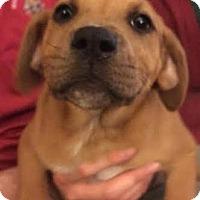 Adopt A Pet :: Wynona - Garden City, MI