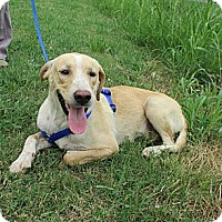 Adopt A Pet :: CLYDE/End of Summer Special - Glastonbury, CT
