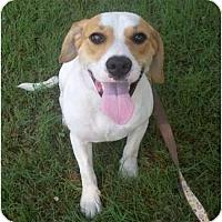 Adopt A Pet :: Daisy (pending adoption) - Adamsville, TN