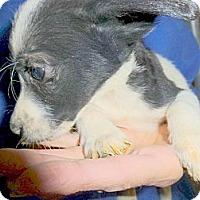 Adopt A Pet :: Skylar - Katy, TX