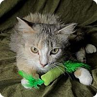 Adopt A Pet :: Ricki - New Egypt, NJ