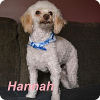 Adopt A Pet :: Hannah -Adopted Sept 2015 - Huntsville, ON