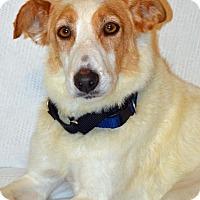 Adopt A Pet :: Lilly Louise - Cedar Rapids, IA