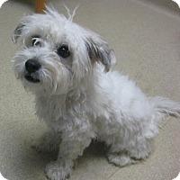 Adopt A Pet :: Mia - Gary, IN