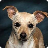 Adopt A Pet :: Finley - Wymore, NE