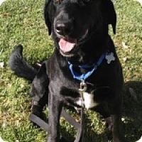 Adopt A Pet :: Tipper - Torrance, CA