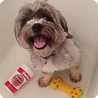Adopt A Pet :: Mr. Flinton - Pleasant Plain, OH