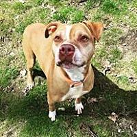 Adopt A Pet :: Ziggy - Ozone Park, NY