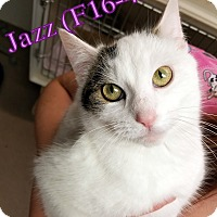 Adopt A Pet :: Jazz - Tiffin, OH