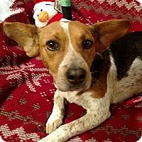 Adopt A Pet :: Maci - Marietta, GA