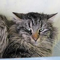 Adopt A Pet :: Rylan - West Des Moines, IA