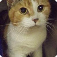 Adopt A Pet :: Eliza - Martinsburg, WV