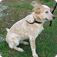 Adopt A Pet :: hannah - Staunton, VA