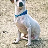 Adopt A Pet :: Riley - Nassau Bay, TX