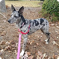 Adopt A Pet :: Cricket - Charlotte, NC
