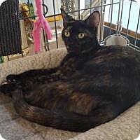 Adopt A Pet :: Sassy - Raritan, NJ
