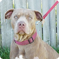 Adopt A Pet :: Bailey - Shelby, MI