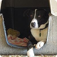 Adopt A Pet :: Bubba - Natchitoches, LA