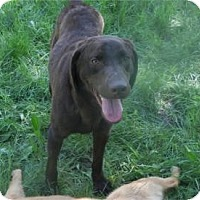 Adopt A Pet :: Hershey ADOPTED!! - Antioch, IL