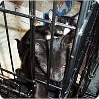 Adopt A Pet :: Spot - Westfield, MA
