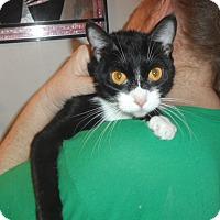 Adopt A Pet :: Allie - Pensacola, FL
