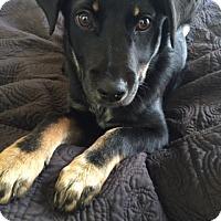 Adopt A Pet :: Dixie - Bedminster, NJ