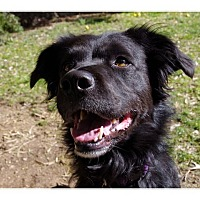 Adopt A Pet :: Abby - Tempe, AZ