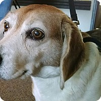 Adopt A Pet :: Snickers  COURTESY POST - Chesterfield, MI