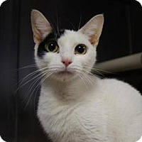 Adopt A Pet :: Thelma - New Milford, CT