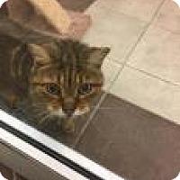 Adopt A Pet :: Raymond 2280 - Columbus, GA