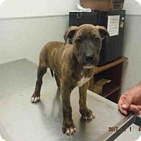 Adopt A Pet :: A572775 - Oroville, CA