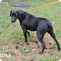 Adopt A Pet :: Rose - Washington, GA
